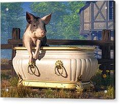 Pig In A Bathtub Acrylic Print by Daniel Eskridge