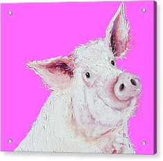 Pig Painting On Hot Pink Acrylic Print by Jan Matson
