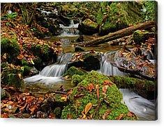 Pigeon Creek Cascades Acrylic Print