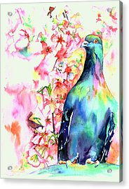 Pigeon Eye Acrylic Print by Christy  Freeman
