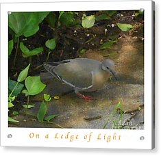 Acrylic Print featuring the photograph Pigeon Poster by Felipe Adan Lerma
