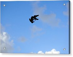 Pigeons Shadow Acrylic Print