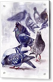 Pigeons Watercolor Acrylic Print