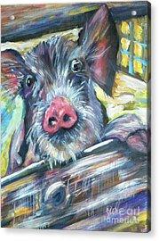 Piggy Acrylic Print