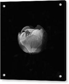 Piggyback Acrylic Print