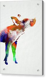 Piglet Wild Animals Of The World Watercolor Series On White Canvas 007 Acrylic Print