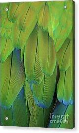 Piha Oe I Ka Maikai Acrylic Print by Sharon Mau