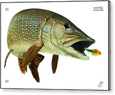 Pike Acrylic Print by Anders Ovesen