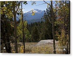 Pikes Peak Framed Aspens Landscape Acrylic Print by Marta Alfred