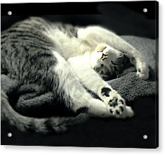 Pilates Cat Acrylic Print by Diana Angstadt