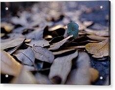 Pile Of Leaves At Dusk In Savannah Georgia Acrylic Print