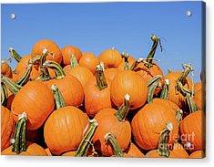 Pile Of Pumpkins Acrylic Print
