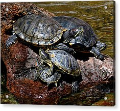 Pile Of Sliders - Turtles Acrylic Print