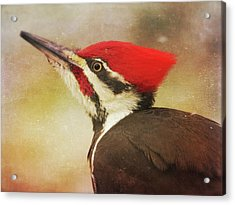 Acrylic Print featuring the photograph Pileated Woodpecker With Snowfall by Heidi Hermes