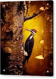 Pileated Woodpecker Forest Sunrise Acrylic Print