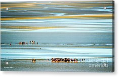 Pilgrims In The Mount Saint-michel Bay Acrylic Print