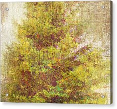 Pinaceae Acrylic Print by Brett Pfister