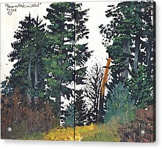Pine And Fir Tree Forest Acrylic Print by Martin Stankewitz