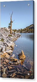Acrylic Print featuring the photograph Pine And Rock by Alexander Kunz