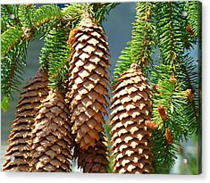 Pine Cones Art Prints Conifer Pine Tree Landscape Baslee Troutman Acrylic Print by Baslee Troutman