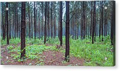 Acrylic Print featuring the photograph Pine Grove And Fog In Charlotte Nc Panorama by Ranjay Mitra