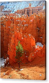 Pine Hoodoos At Bryce Canyon Acrylic Print by Pierre Leclerc Photography
