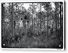 Pine Land In B/w Acrylic Print by Rudy Umans