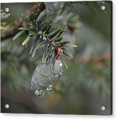 Pine Acrylic Print by Mary Zeman