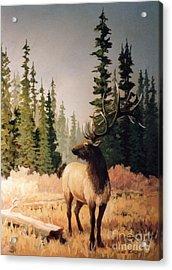 Pine Meadow Elk Acrylic Print by JoAnne Corpany