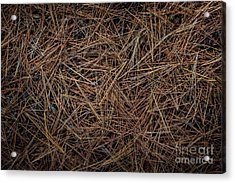 Pine Needles On Forest Floor Acrylic Print by Elena Elisseeva
