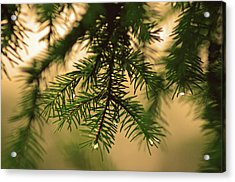 Acrylic Print featuring the photograph Pine by Robert Geary