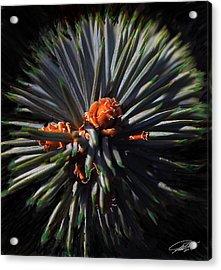 Pine Rose Acrylic Print