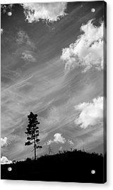 Pine Silhouettes Acrylic Print