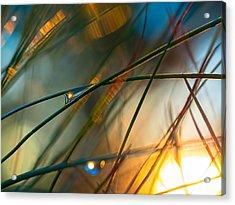 Pine Needle Sunset Acrylic Print