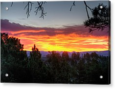 Acrylic Print featuring the photograph Pine Sunrise by Fiskr Larsen
