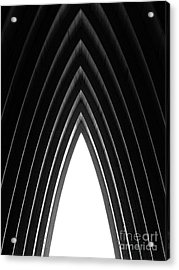 Pine Acrylic Print by Tapio Koivula