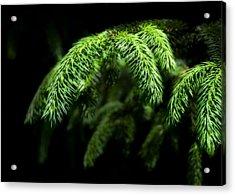 Pine Tree Brunch Acrylic Print by Svetlana Sewell
