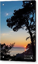 Pine Tree Acrylic Print by Delphimages Photo Creations
