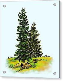 Pine Tree Nature Watercolor Ink Image 2b        Acrylic Print