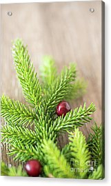 Pine Tree Needles Acrylic Print by Taylor Martinsen
