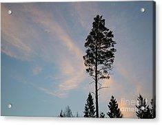 Pine Tree Silhouette Acrylic Print by Kennerth and Birgitta Kullman