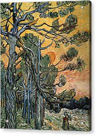 Pine Trees At Sunset Acrylic Print by Vincent van Gogh