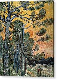 Pine Trees At Sunset Acrylic Print