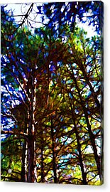 Pine Trees In Abstract 1 Acrylic Print
