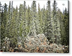 Acrylic Print featuring the photograph Pine Trees Rustic Mountain by Andrea Hazel Ihlefeld