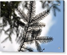 Pine View Acrylic Print by JAMART Photography