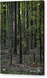 Acrylic Print featuring the photograph Pine Wood Sunrise by Skip Willits