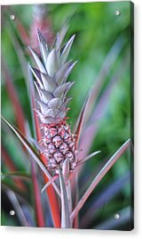 Pineapple Acrylic Print by Kelly Wade