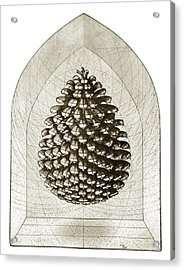 Pinecone Acrylic Print by Charles Harden