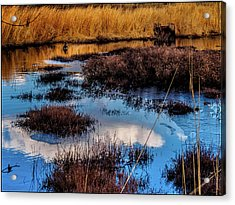 Pineland Cloud Reflections Acrylic Print